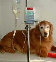 Veterinary Anesthesia Machine VET-PRO VIP 2000 - MedWOW